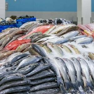 بيع الاسماك الطازجة في…