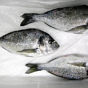 Export and Import Fresh Denise Fish @ Jordan…