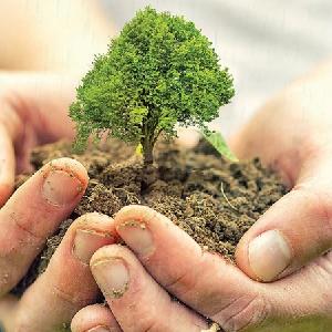 استشارات صيانة حدائق في…