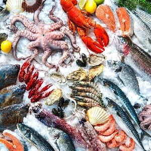 اسعار السمك الطازج في…