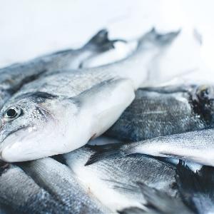 Exporting Dennis Fish @ Jordan 00962796222808
