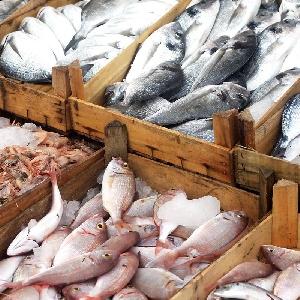 استيراد الاسماك الطازجة…