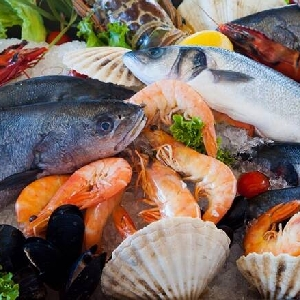 Importing Fresh Fish and Seafood for Amman,…