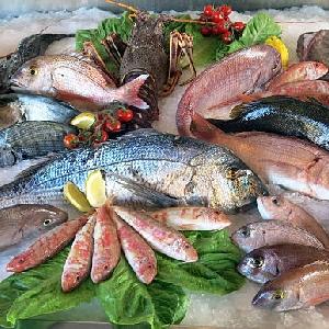 Fish Supply @ Jordan - Al Mayar for Taybat…