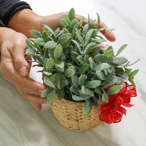 عروض هدايا نباتات الزينة…