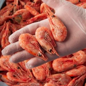 Export and Import Shrimp @ Jordan 00962796222808