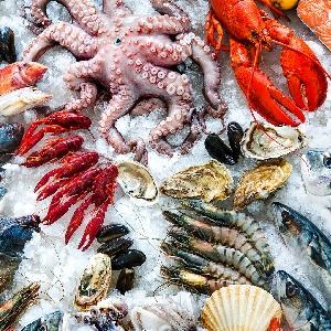 Fresh Fish Daily Offers in Irbid 0796222808…