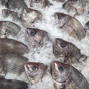 Exporting Sea Bream Fish @ Jordan 00962796222808